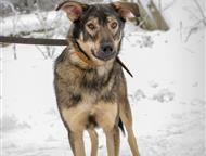 Санкт-Петербург: Собака в хорошие руки СПб. Приют Островок надежды     Я очень хочу домой   беренг ищет дом!     Кроха Беренг ждет гостей и надеется, что скоро у нег
